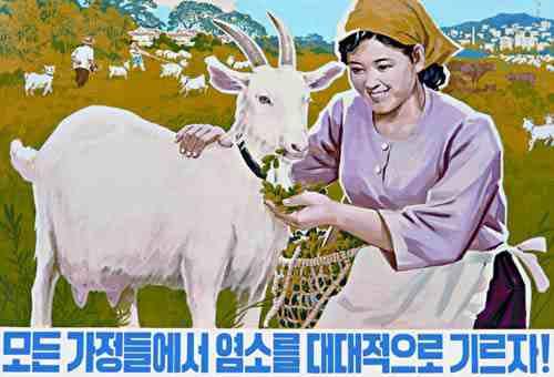 North Korean Propaganda Poster: raise goats
