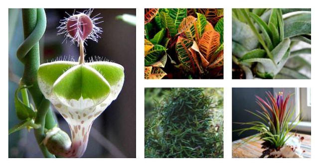 tendances végétales
