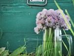 Permaculture : prendre soin de la Terre et des Hommes, partager équitablement les ressources