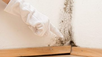 mold e1466779538689 - Free home evaluations!!!