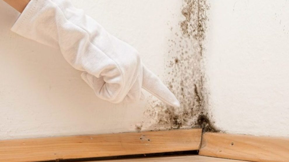 mold e1466779538689 - Free home evaluations!!!