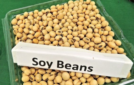 soy beans 968986 640 e1476376352776 - Cancer causing foods you should avoid