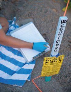 Beach Sign Do not disturb sea turtle nest 232x300 - El proyecto de Fundación de Parques de Miami Dade  recibe fondos del Programa de Subsidios para las Tortugas Marinas de la Florida