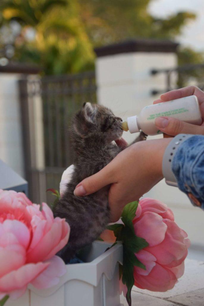 "cats scaled e1591137784920 854x1280 - Don't ""Kit-nap"" the Kittens!"