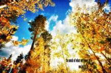 Fall in Tahoe