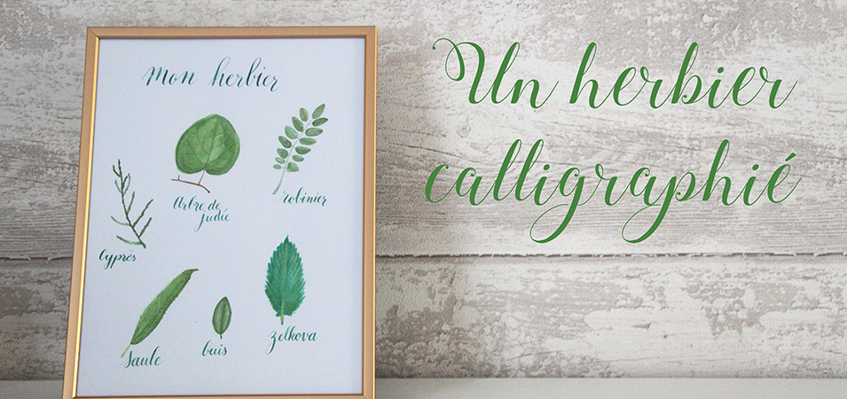 herbier calligraphie