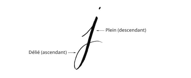 Plein et délié en calligraphie - calligraphique