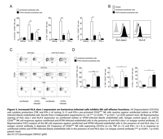 Gale Academic OneFile - Document - NK cell activation in human ...