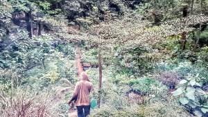 nboforest
