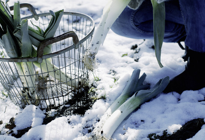 Palmen Winterfest Machen Gartenpalmen Winterfest Machen