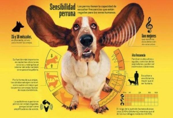 oido-del-perro