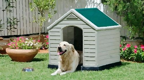 Perro exterior