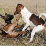 Lo que dicen los medios sobre perros