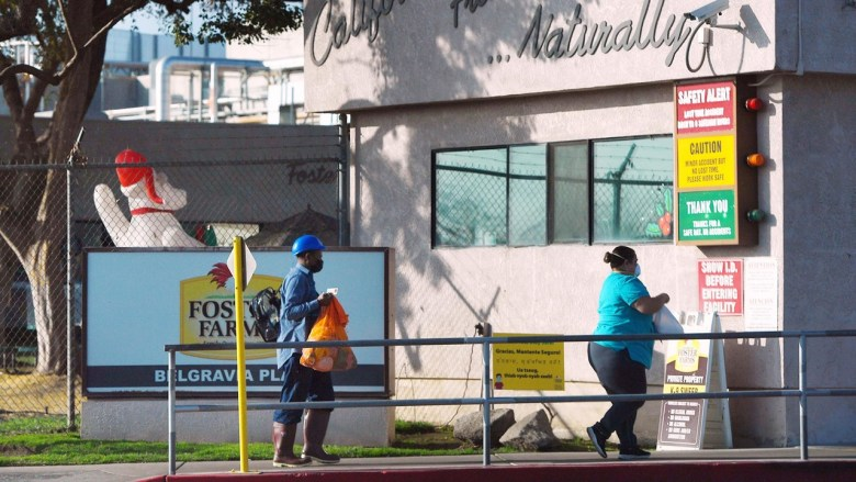 Los trabajadores llegan al sitio de Foster Poultry Farms en 900 W.Belgravia Ave., el miércoles por la tarde, 9 de diciembre de 2020 en Fresno. Foto de Eric Zamora, The Fresno Bee