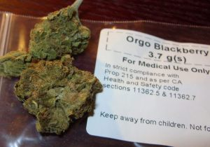 Medical marijuana, photo via Wikimedia Commons