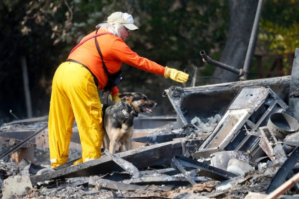 ARADISE, CALIFORNIA - NOVEMBER 19: Kathryn Stewart, of Walnut Creek, Calif., works with her cadaver dog Zabra to search for human remains in a mobile home park in Paradise, Calif., Monday, Nov. 19, 2018. (Karl Mondon/Bay Area News Group)