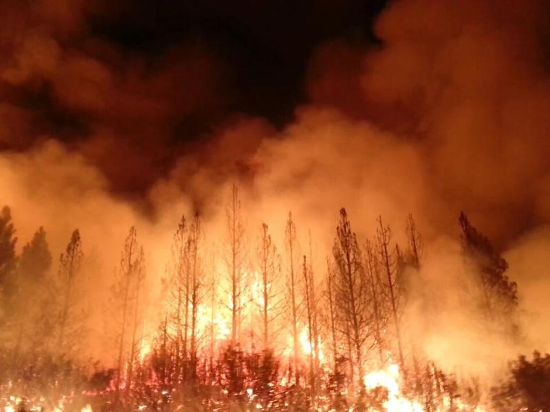 Photo of trees ablaze in a forest fire.