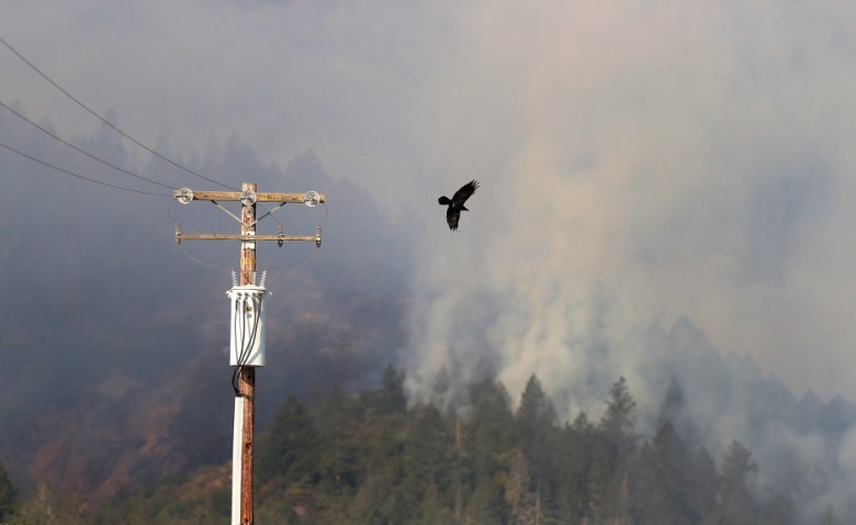 A crow takes flight from a power pole as a fire near Oakville Grade road burns on Monday, Oct. 16, 2017, in Oakville, Calif. (Aric Crabb/Bay Area News Group)