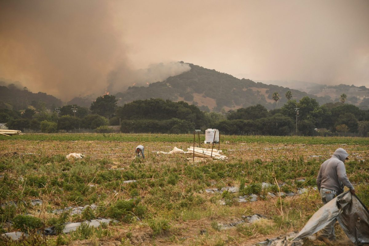 Farmworkers go through fields along Pine Canyon Road as the hillsides behind them burn steadily through the afternoon on Aug. 19, 2020. Photo by Ayrton Ostly/The Californian