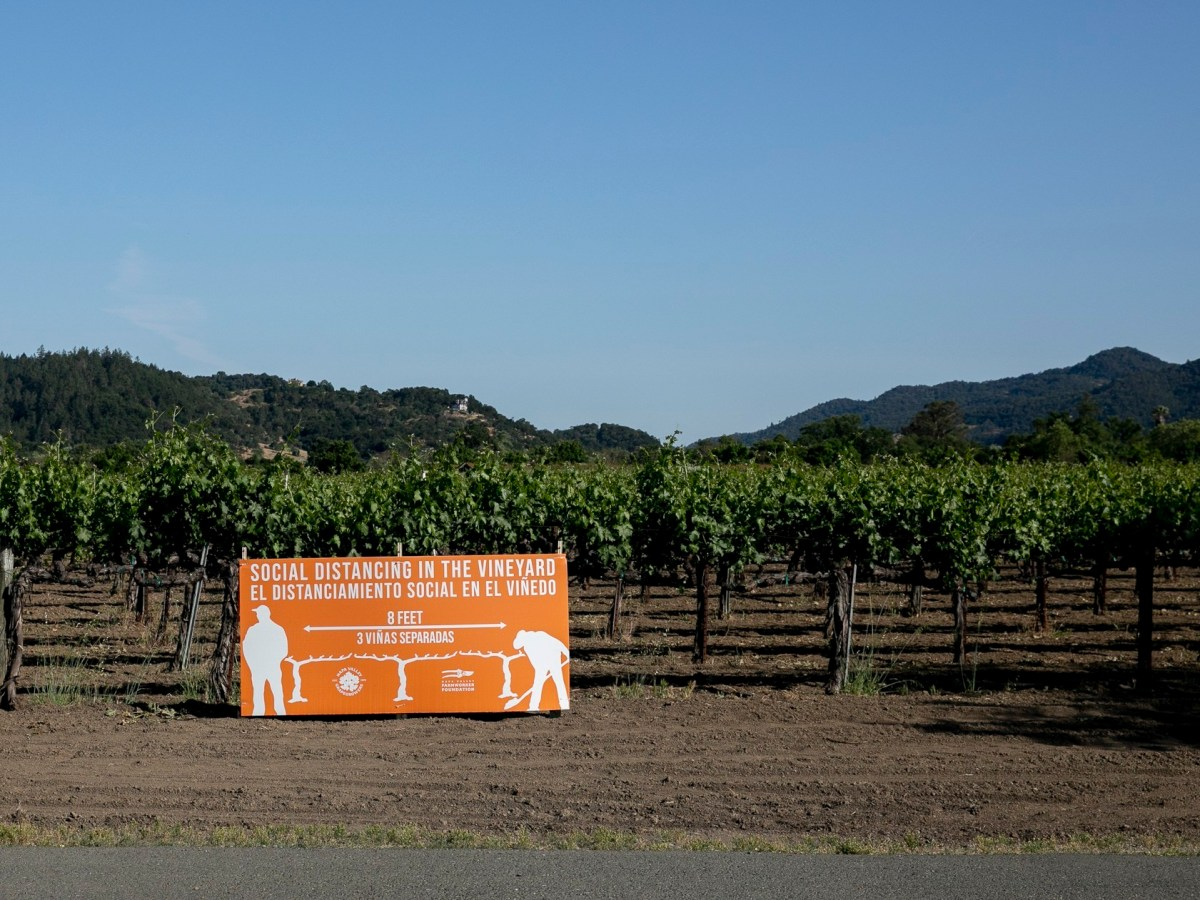 Un cartel que anima a los trabajadores de los viñedos a practicar el distanciamiento social colocado entre las vides el 6 de mayo de 2020 en Oakville. El condado de Napa no recoge datos sobre brotes del coronavirus en el lugar de trabajo. Foto de Anne Wernikoff para CalMatters