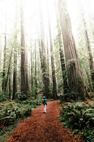 Woman standing on a trail looking up at a grove of giant Sequoia trees at Humboldt Redwoods State Park. Photo via iStock