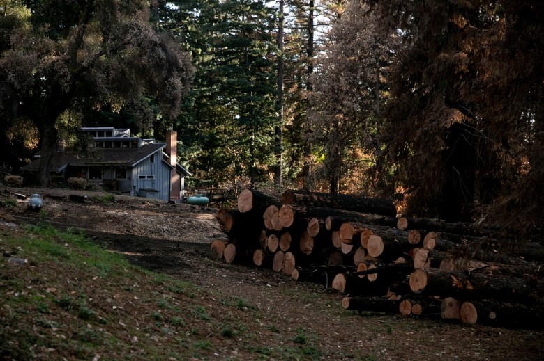 A large timber deck of Douglas Firs left on the edge of the Anderson's property after PG&E cut down the dead trees damaged during the CZU Lightening Complex fires in August, in Bonnie Doon on Dec. 15, 2020. Photo by Anne Wernikoff for CalMatters