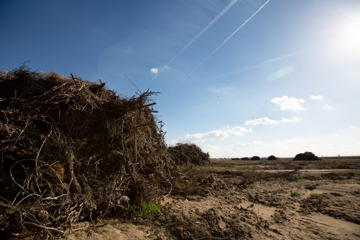 Piles of debris from a grape crop in Shafter on Feb. 16, 2021. The debris could be burned or chipped but will likely be burned due to stakes and metal wires throughout the piles. Photo by Shae Hammond for Cal Matters