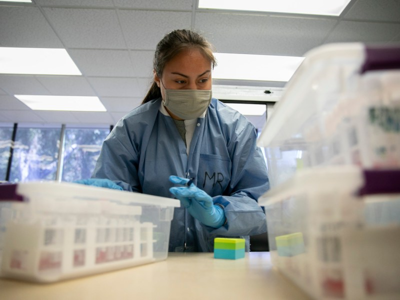 Meredith Reyes, a lab technician, labels COVID-19 test swabs before processing at the Sonoma County Department of Public Health in Santa Rosa. California counties are fighting for more state health funds. Photo by Anne Wernikoff, CalMatters