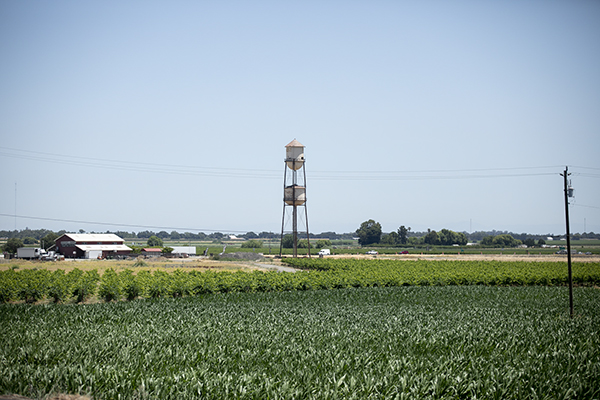 The historic Discover the Delta water tower stands in a field along State Highway 12 near the eastern shore of the Sacramento River in Sacramento County on June 15, 2021. In a sign of worsening drought, the state on Tuesday warned about 4,300 users to stop diverting water from the San Joaquin-Sacramento Delta watershed, stretching from Fresno to the Oregon border. Photo by Anne Wernikoff, CalMatters