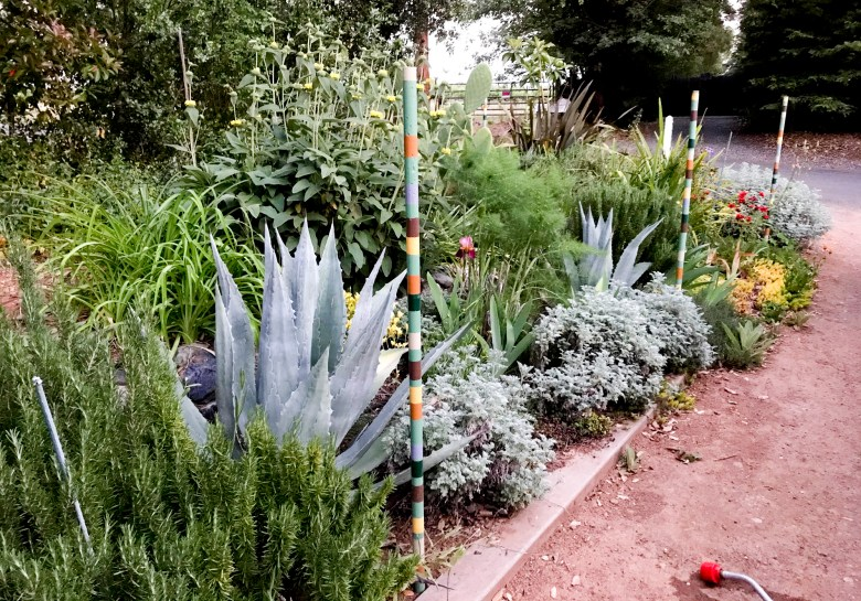 Carpenter has slowly been converting his garden to native and drought-resistant plants. Photo courtesy of Darrell Carpenter