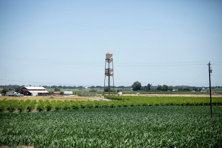 The historic Discover the Delta water tower stands in a field along State Highway 12 near the eastern shore of the Sacramento River in Sacramento County on June 15, 2021. The state has notified 9,000 water users from Fresno to Sacramento to stop diverting water from the San Joaquin and Sacramento rivers watershed. Photo by Anne Wernikoff, CalMatters