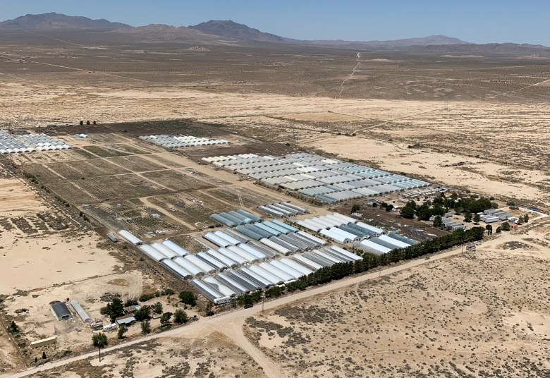 Aerial photo of an illegal marijuana cultivation site in San Bernardino County. Photo courtesy of San Bernardino County Sheriff's Department