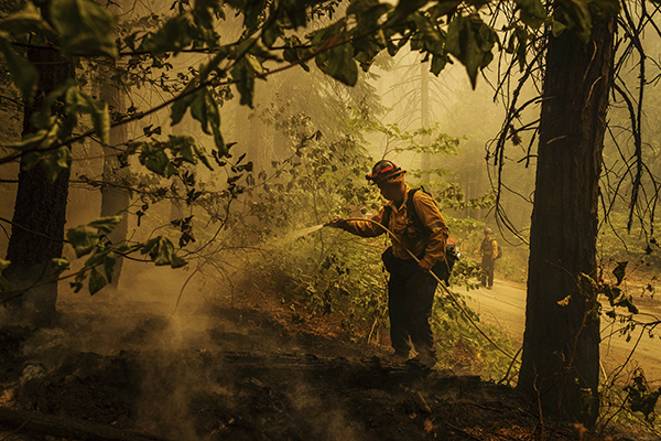 Central Calaveras firefighter Ryan Carpenter extinguishes flames from the Caldor Fire on Hazel Valley Road east of Riverton on Aug. 19, 2021. Photo by Ethan Swope, AP Photo