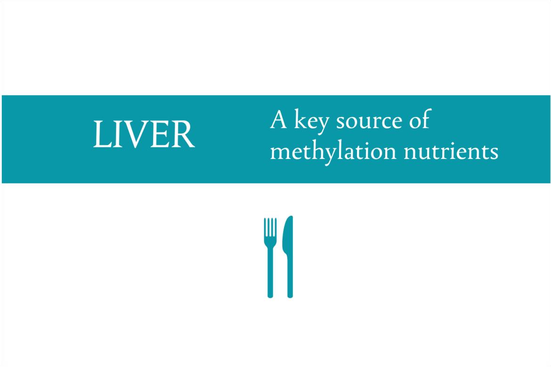 Liver: A key source of methylation nutrients from CALMERme.com