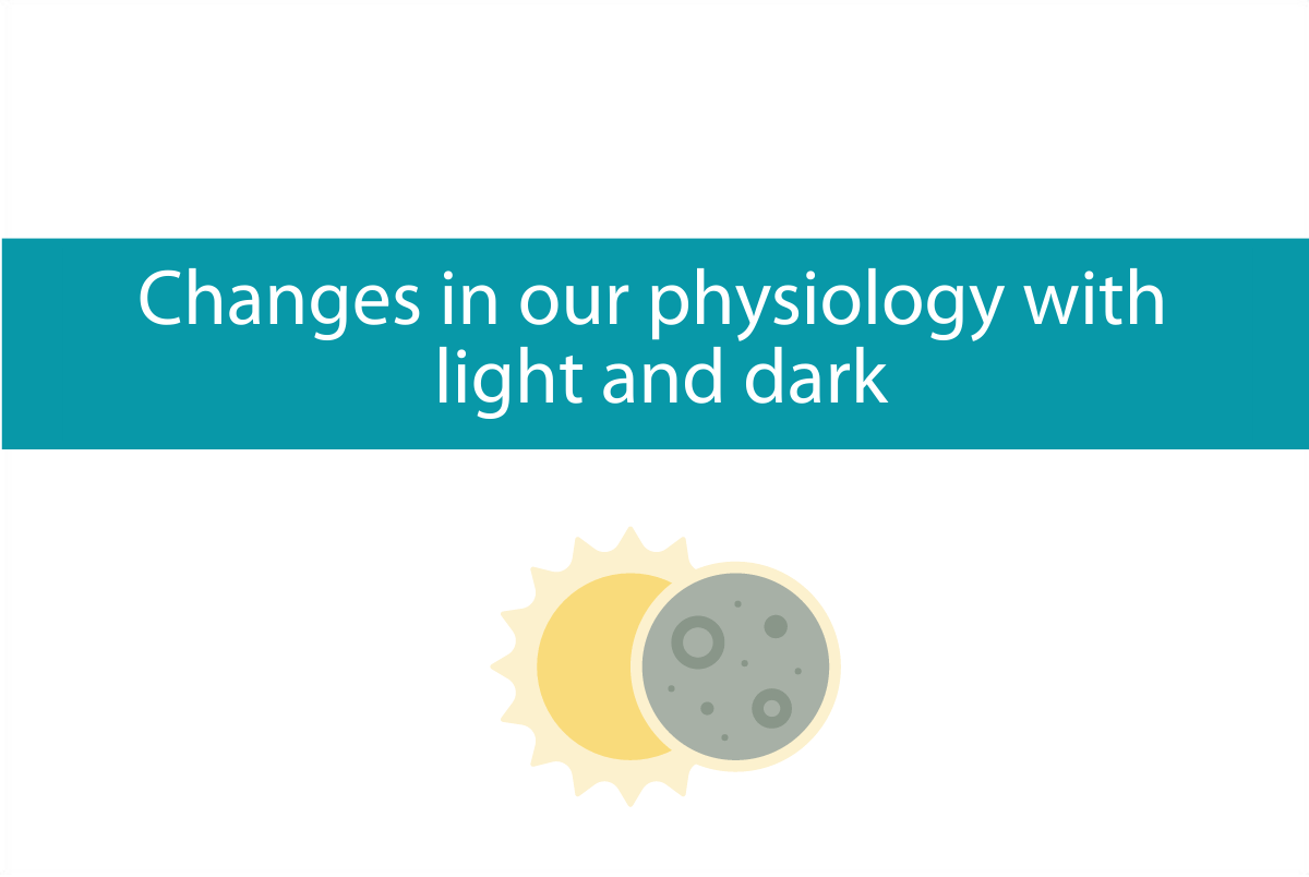 Blogheader for discussion on changes in physiology with light and dark cycle from CALMERme.com