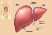 liver picture