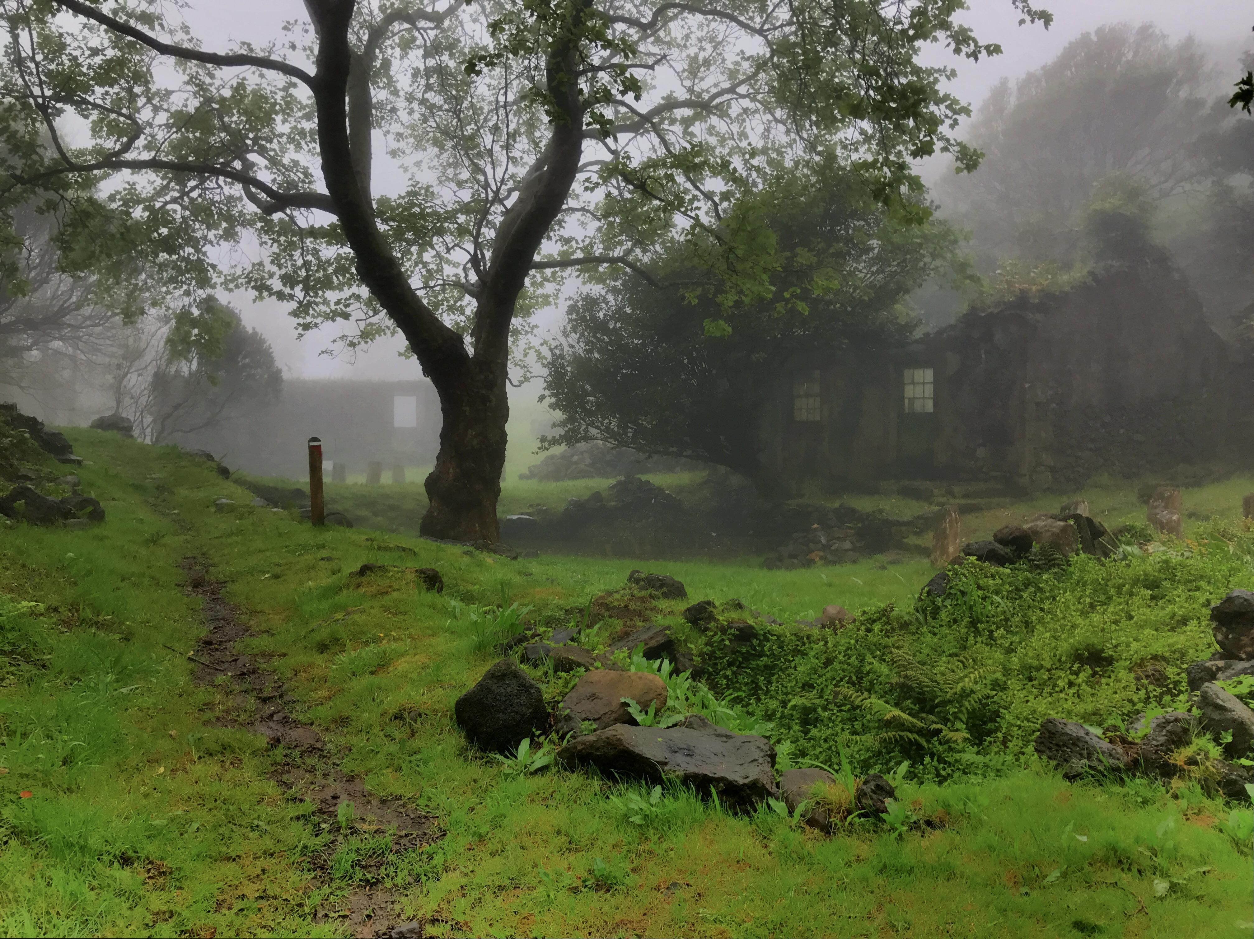 Casa das Levadas and Casa das Flores under mist
