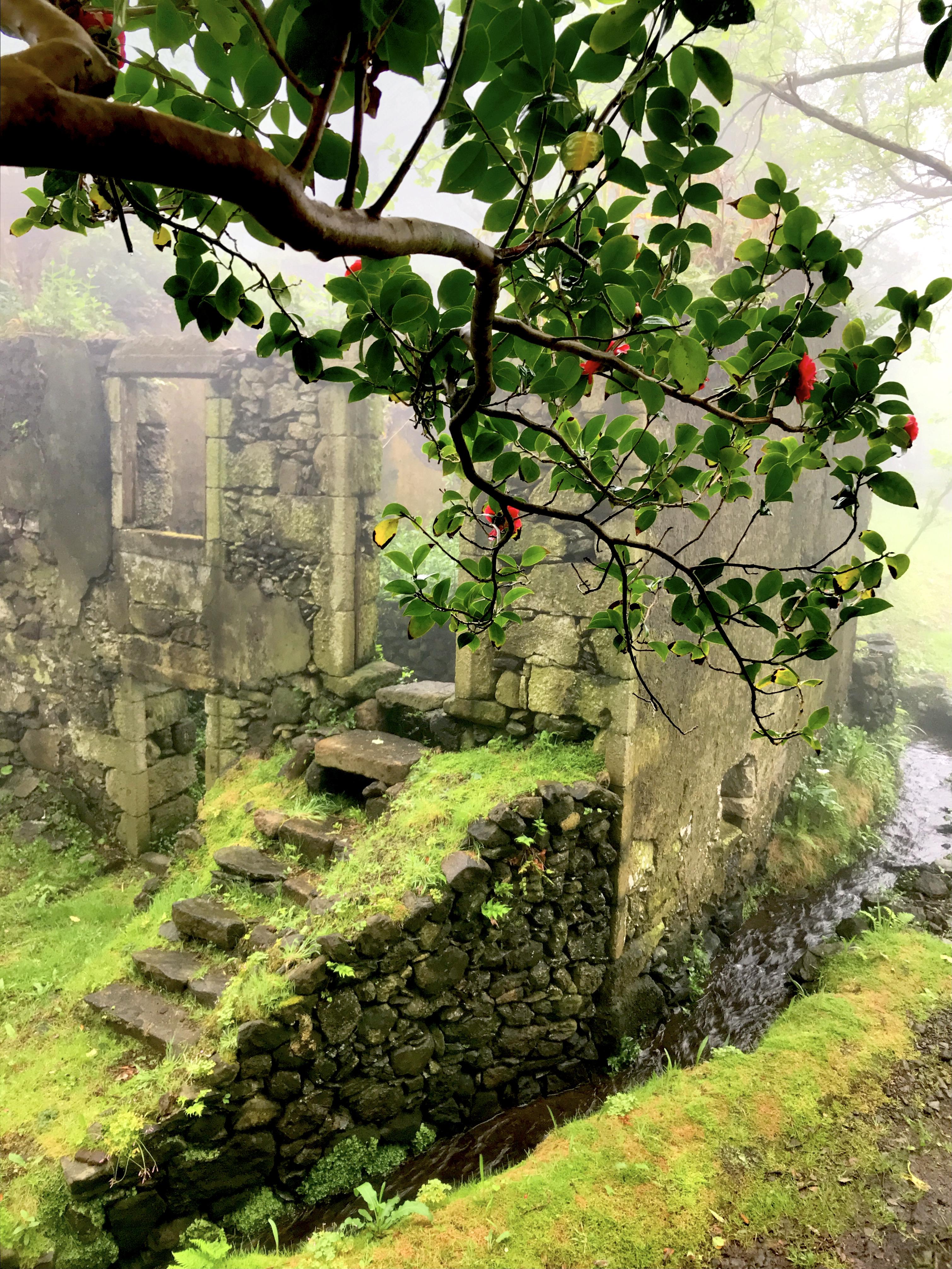 Casa do Verde através de japoneira