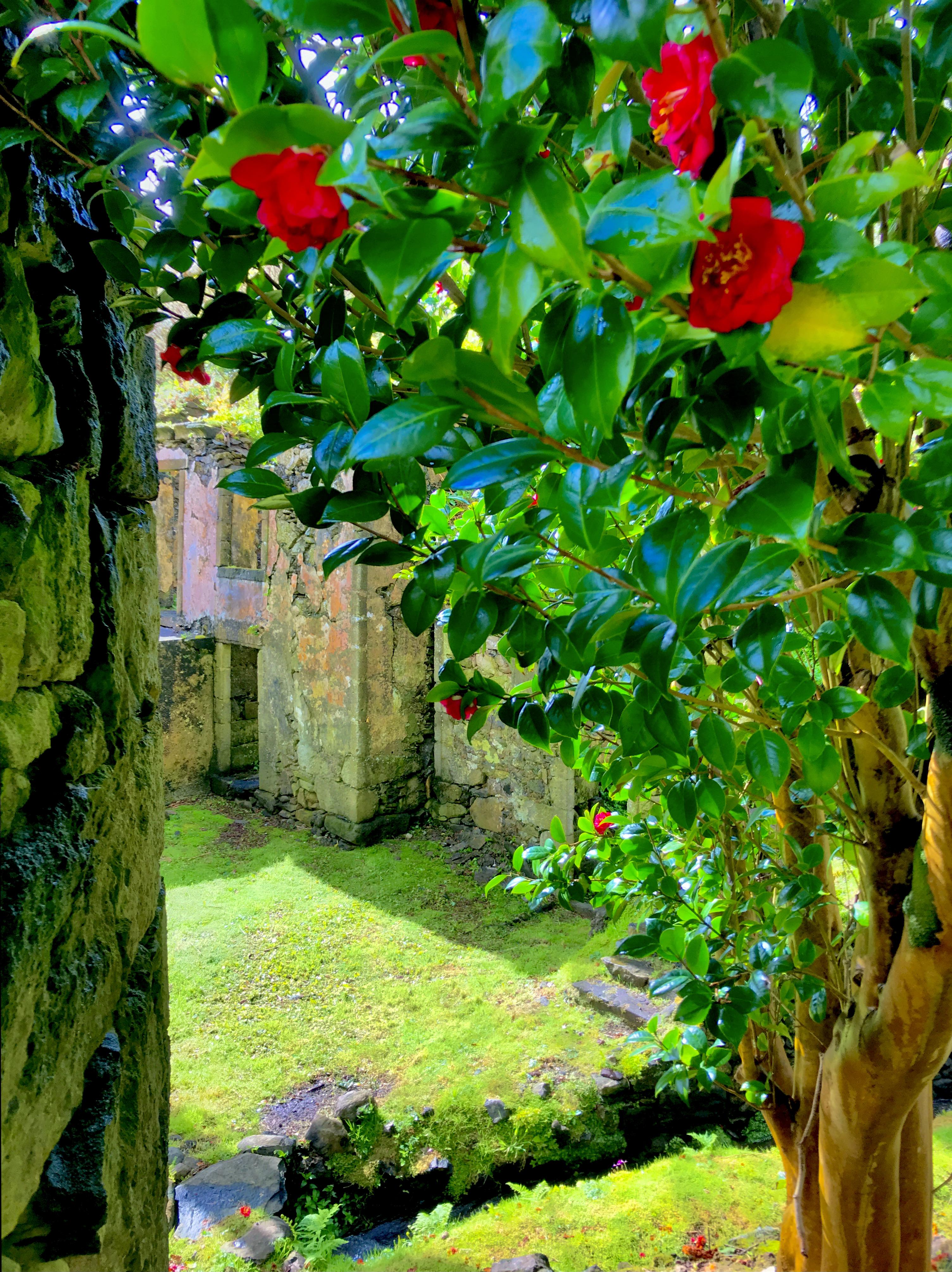 Casa dos Figos Maduros and Casa do Verde after the rain through camellia