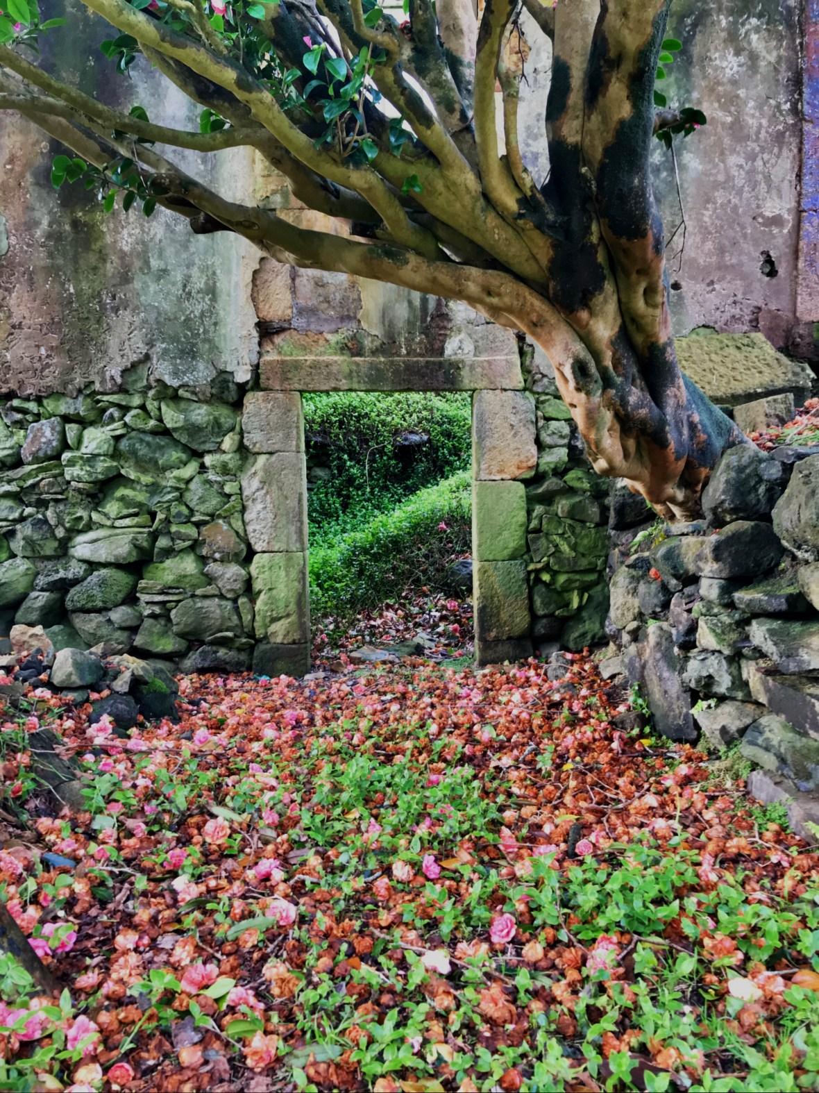 Door of Casa das Flores with camellia