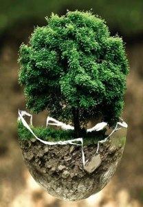Un árbol en una maseta