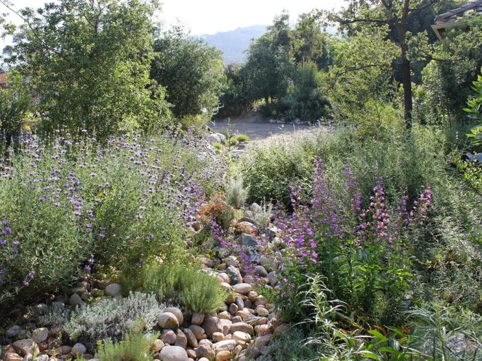guide native garden