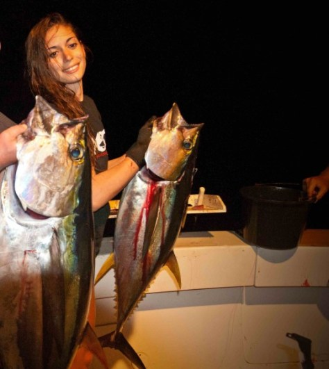 Spearfishing 3