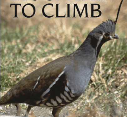 quail with article title