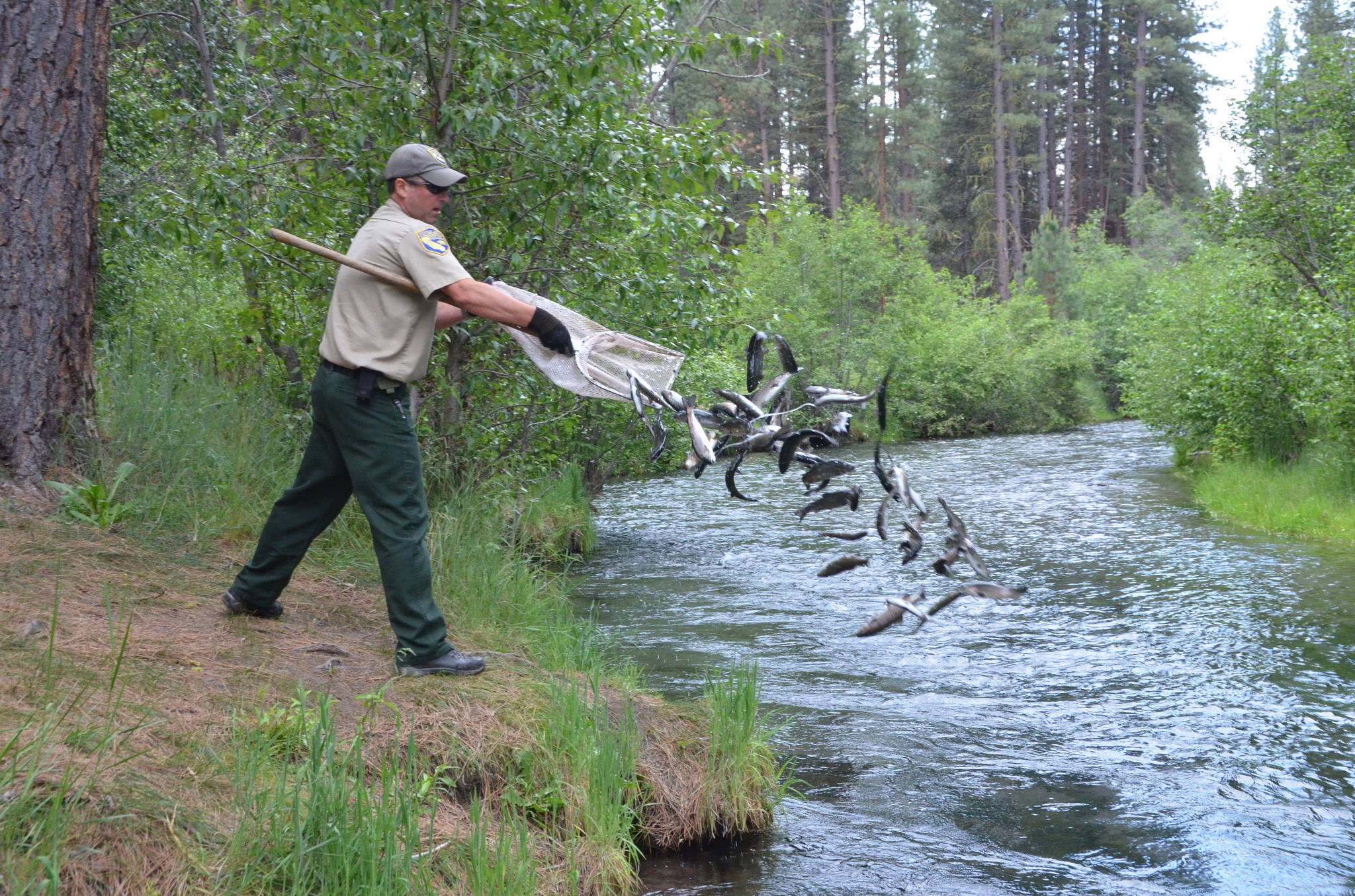 Cdfw to stock 10 000 pounds of merced county trout for Georgia fish and wildlife
