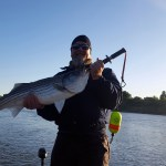 Swimbaits For NorCal Stripers