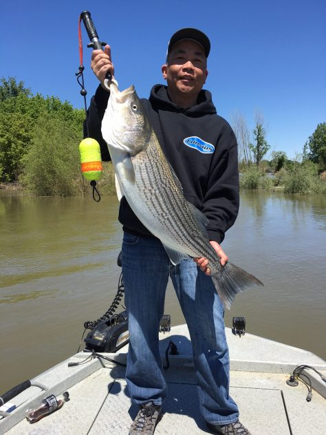 Striper Fishing Rocks On The Feather River