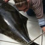 Last Chance For California's Halibut Fishing