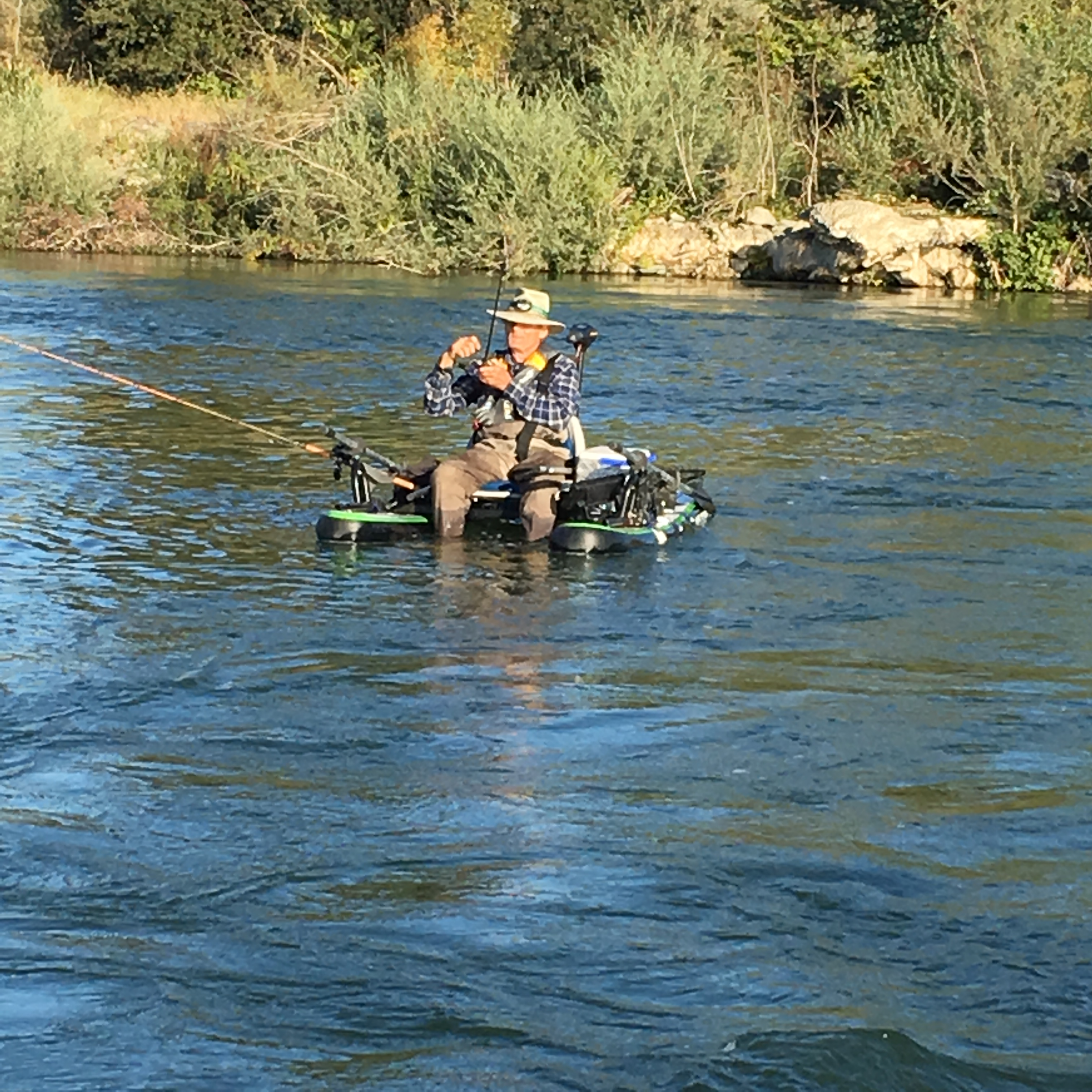 Frenzied fishing on the feather for Feather river fishing