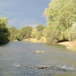 Central Valley Salmon Numbers Of Returning Fish Look Solid